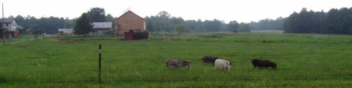 Peaceful scene of contented donkeys