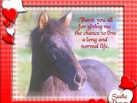 Thanks from Sadie Dawn