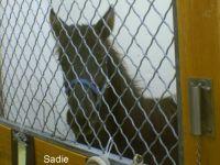 10/30 Sadie in her OSU stall